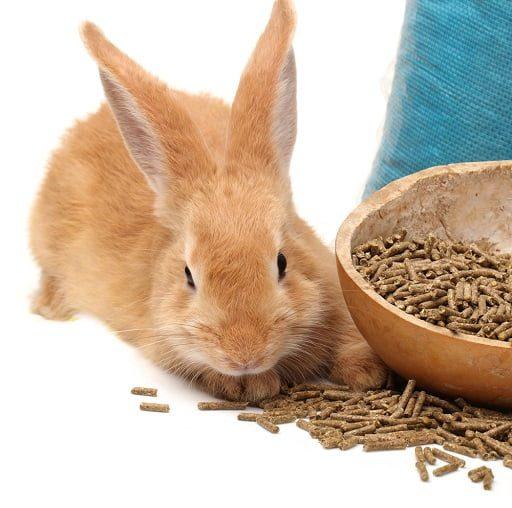 Cara Memberi Makan Kelinci dengan Pelet