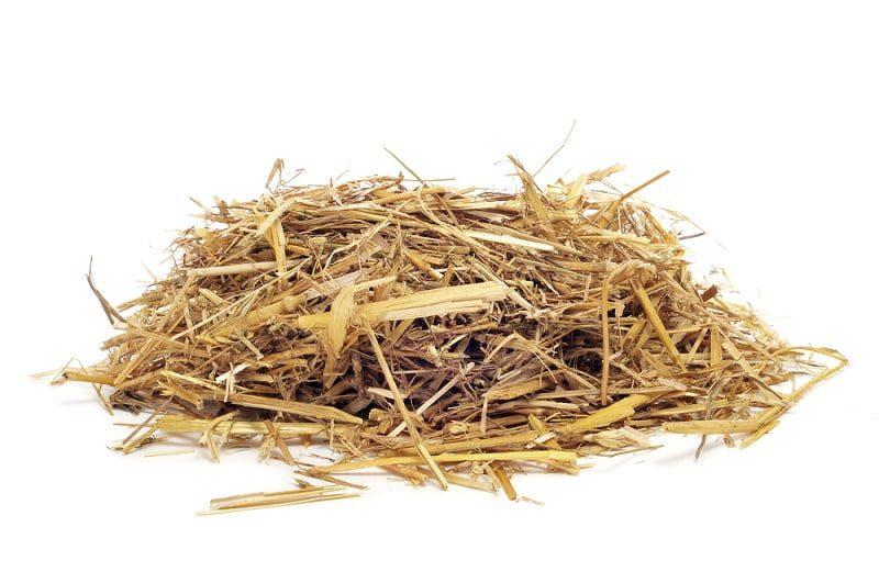 Cara Memberi Makan Kelinci dengan Rumput Hay
