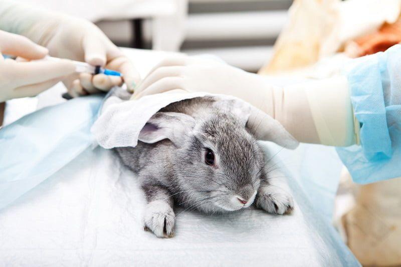 Cara Merawat Kelinci - Membawa ke Dokter