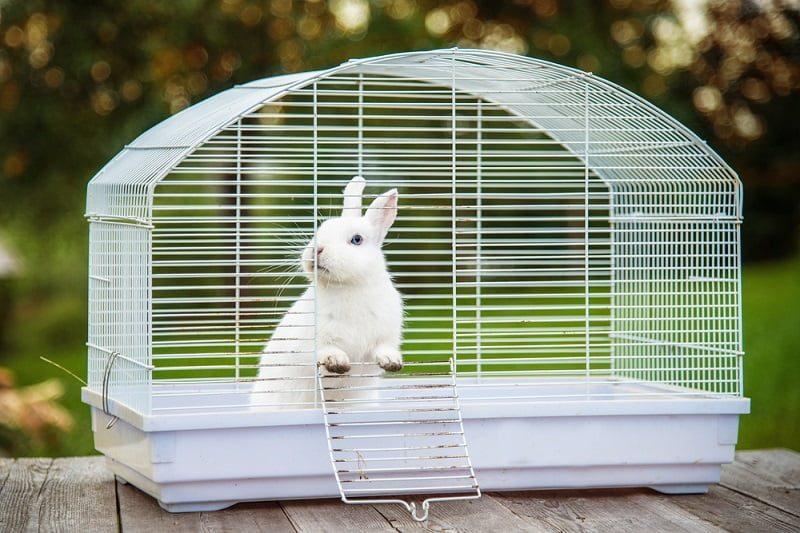 Cara Merawat Kelinci di Kandang