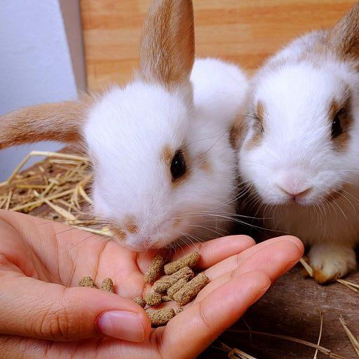 Makanan Kelinci Kecil Pelet