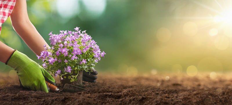 Manfaat Berkebun untuk Kesehatan