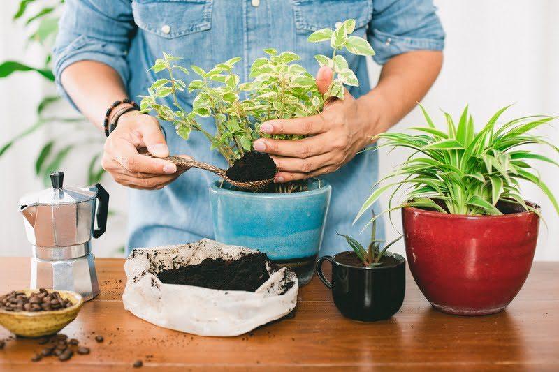 Manfaat Ampas Kopi untuk Kompos